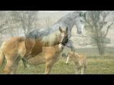 «Лошади.» под музыку Из м/ф Большой секрет для маленькой компании - «Большой лошадиный секрет (Летающие лошади)». Picrolla