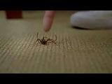 Кто сильнее человек или паук?:)